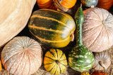 striped and polka dotted pumpkins