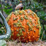 orange pumpkin with green and orange warts