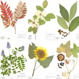 NYBG Herbarium Specimens