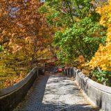 A stone bridge leading to forest showing its fall foliage