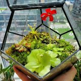 A terrarium with green plants and a red flower