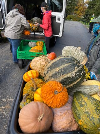 Photo of pumpkins being loaded into the donation van
