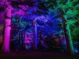 Conifers with purple and green lights