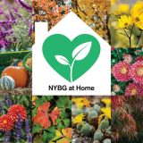 Collage of colorful plant and flower images in squares with the NYBG at Home logo green heart in a white house siloutte in the middle