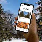 Hand holding iPhone with NYBG black logo and two images of trees in winter in front of a winter landscape showing the Bloomberg Connects app.