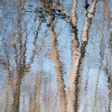 Blurred blue water with ripples reflecting bare tree branches stretching across the image
