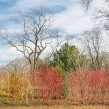branching of trees and grasses in the native plant garden