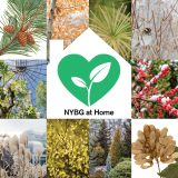 "A variety of tiled images of winter plants with a white illustration of a home in the center, housing a green heart with a sprout growing inside, along with the words ""NYBG at Home."""