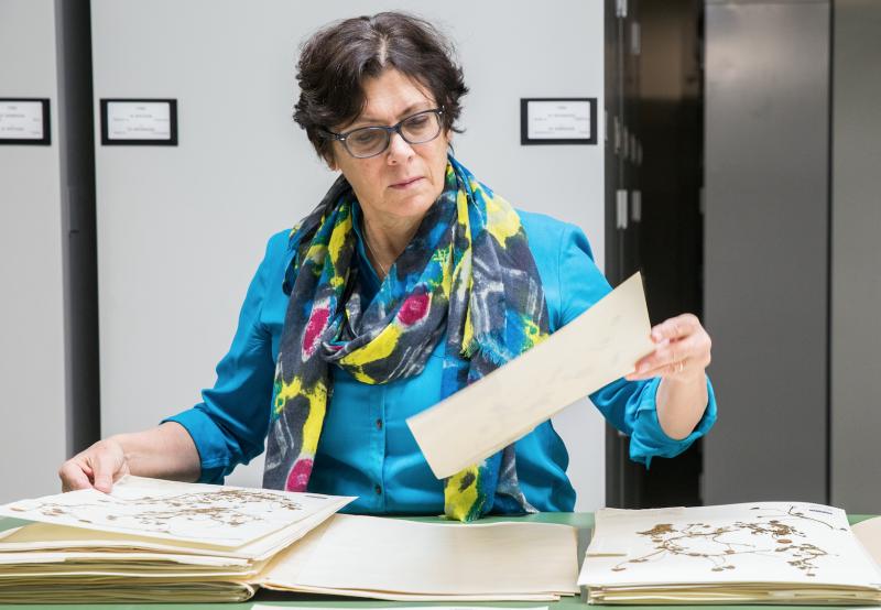 Photo of Barbara Thiers in the Steere Herbarium