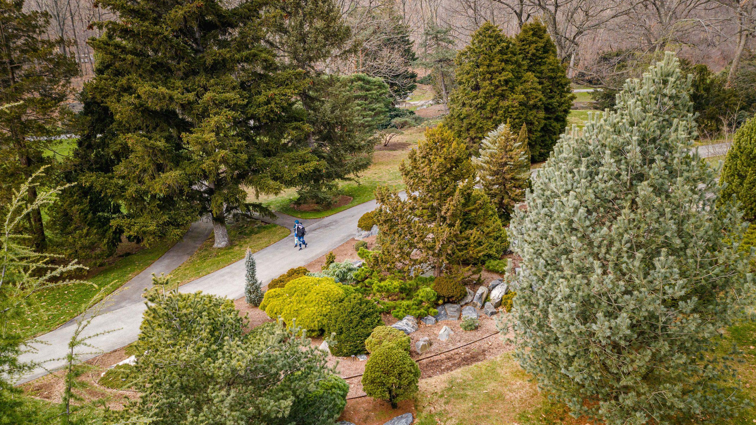 Drone photo of the Benenson Ornamental Conifers