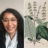A split image of Carolyn Robert and an illustration of African basil