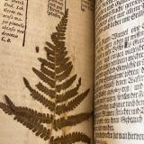 Photo of a fern pressed in an antique book