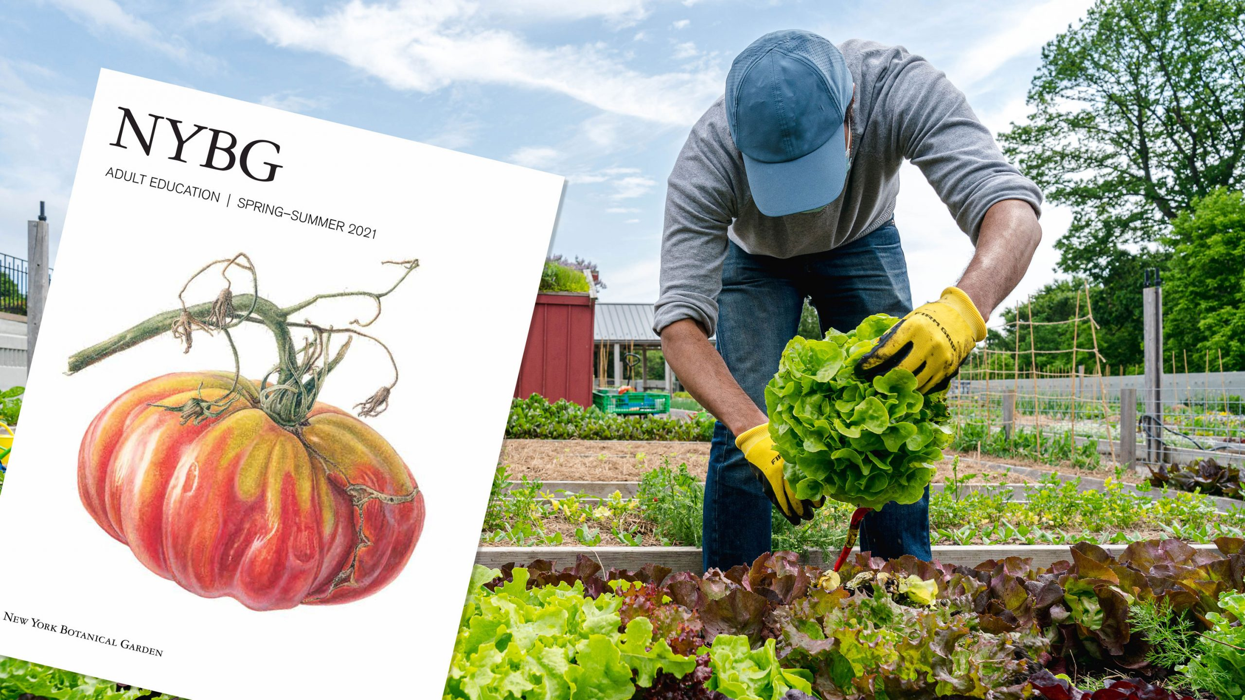 Photo of a gardener harvesting produce alongside the catalog cover