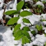 A plant in the snow