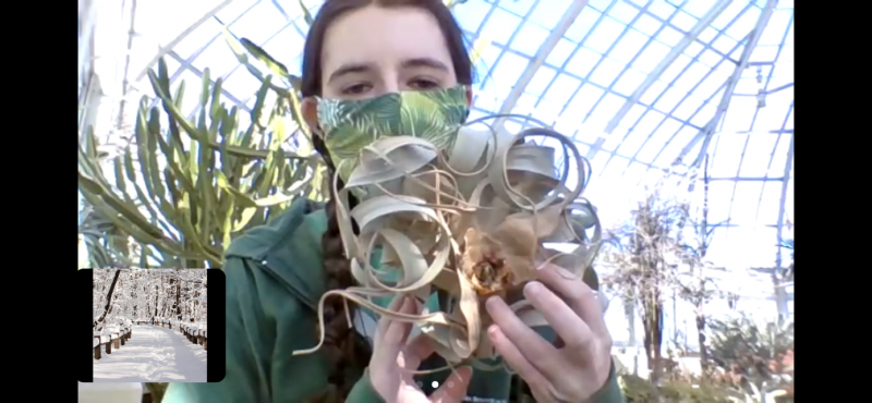 Photo of an NYBG educator holding up an air plant on a Zoom call with children