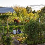 Mother and son gardening in the Edible Academy