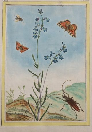 Hand-colored illustration of butterflies and other wildlife around a plant
