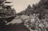 black and white photo of a path lined with floral borders