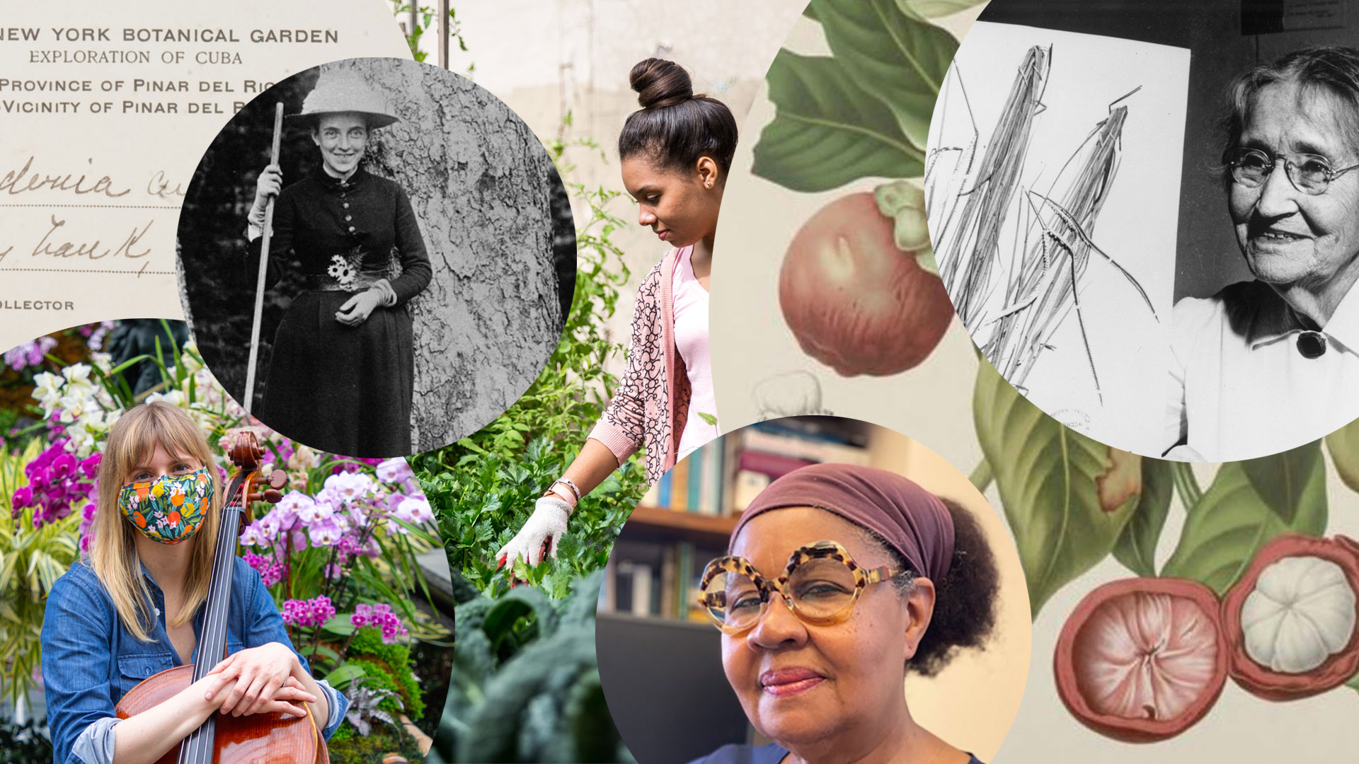 collage of images of plants and women in history