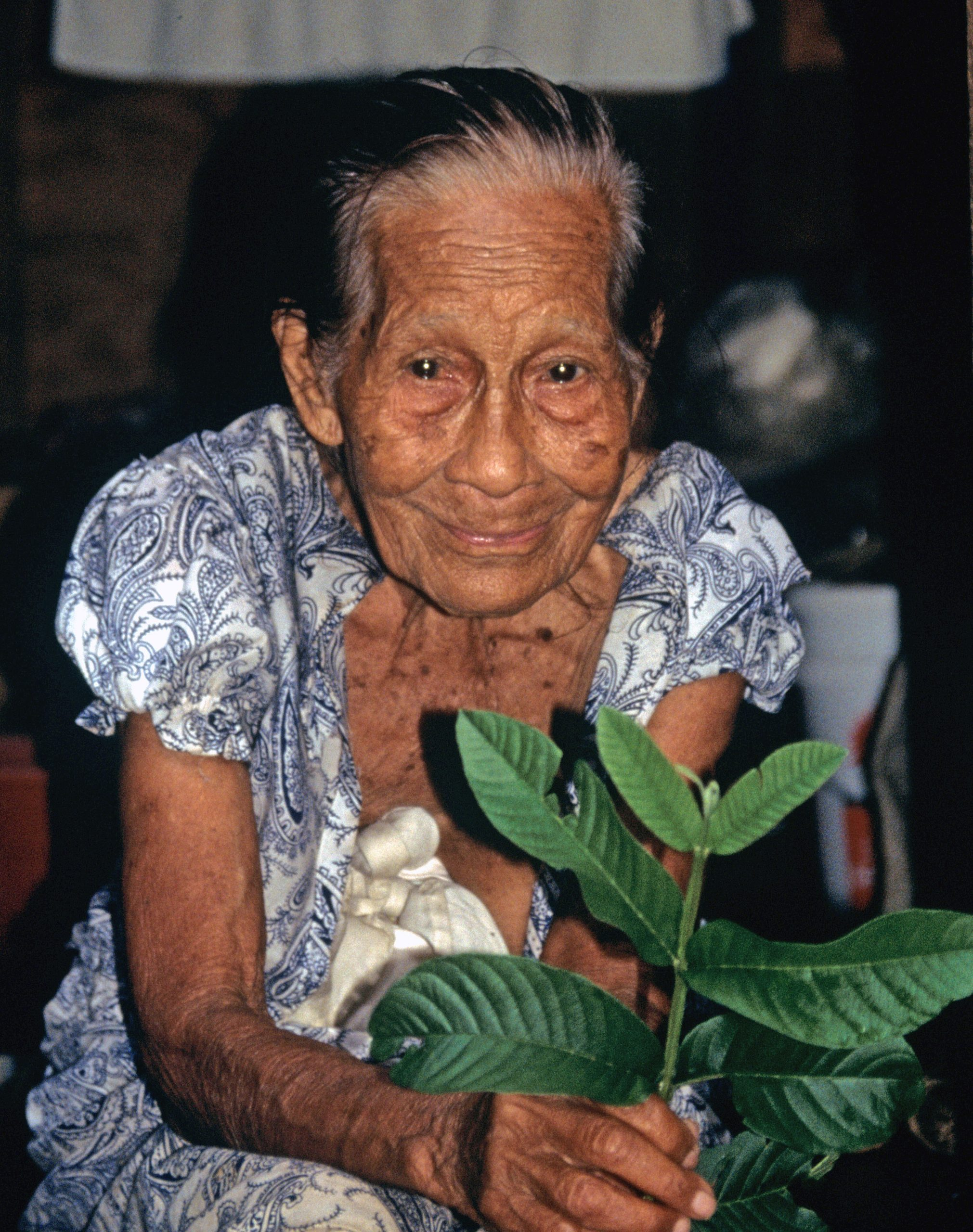 Marie David Healer Pohnpei: Marie David, a healer from Pohnpei, Federated States of Micronesia, holding a stem of the guava plant, Psidium guajava, widely known to treat diarrhea. The young leaves and stems can be chewed directly, or shavings of the bark made into a healing tea.