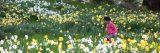 A child running through daffodils