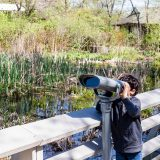 A child looking through binoculars nearby a wetland filled with a variety of plants.