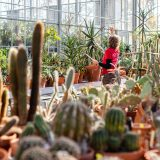 Photo of a SoPH student at work in the Nolen Greenhouse