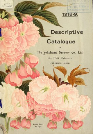 A cover of the Yokohama Nursery Co., Ltd. catalog featuring illustrations of pink Japanese cherry blossoms