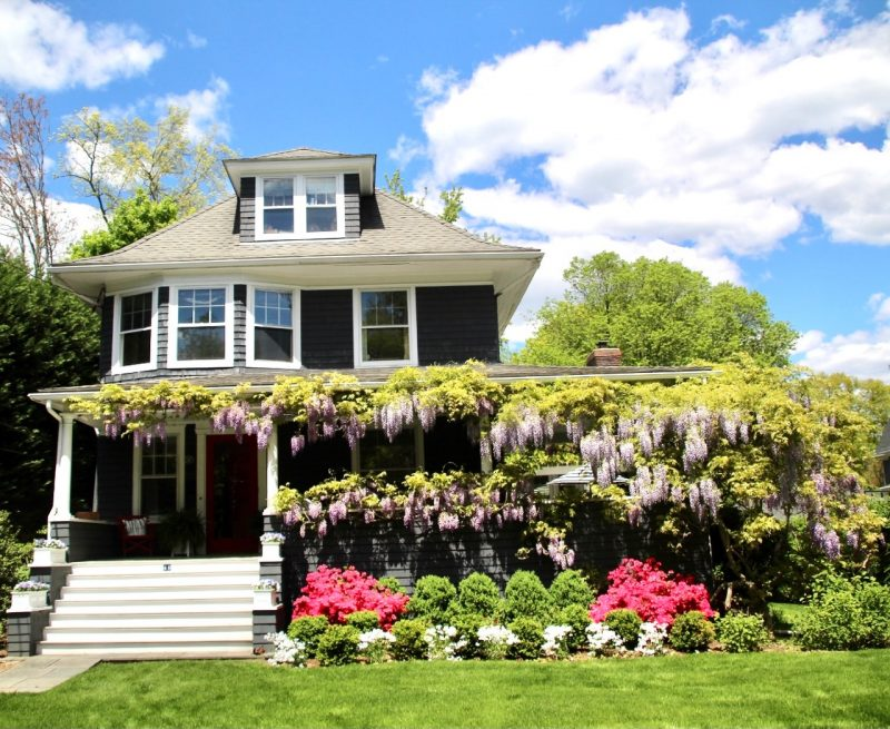 Photo of vining wisteria blooming all along the roof of a home under a bright blue sky