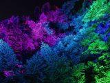 Colorfully illuminated trees at NYBG GLOW