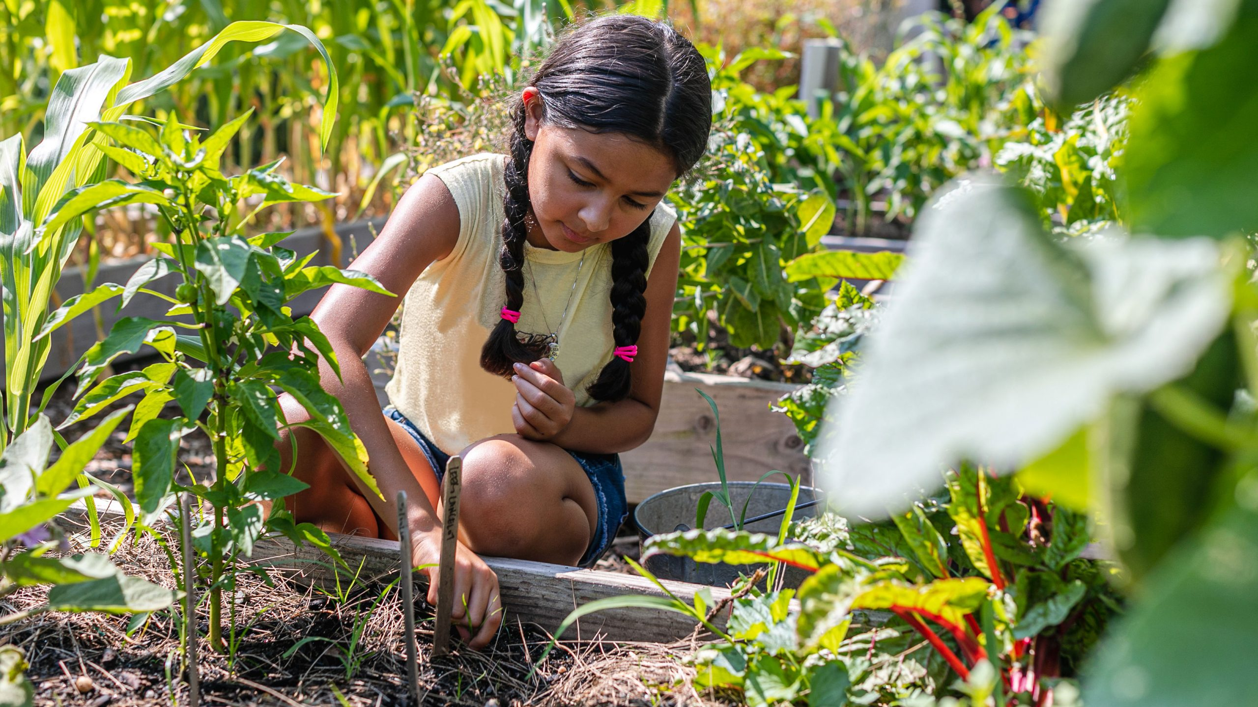 A girl with pigtails digs in a vegetable bed in the Edible Academy