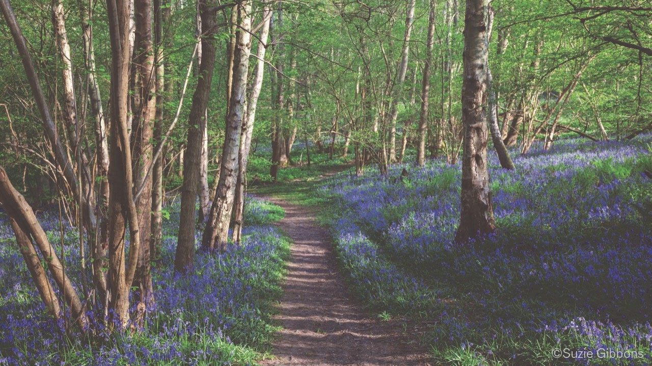 A forest path extends forward into a green summer woodland, lined on either side with blooming purple wildflowers