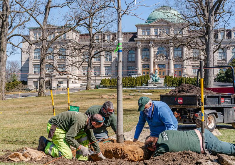 Several men in work clothes lower a young sapling into a hole dug in the ground, with a classical museum building in the background
