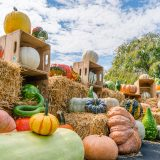 A variety of pumpkins and gourds displayed on top of hay bales