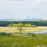 A lone tree grows in the middle of a wetland of green grasses and reeds, with a creek or river cutting through the scene; in the distance a forest rises up to frame the New York City skyline that is visible even further away