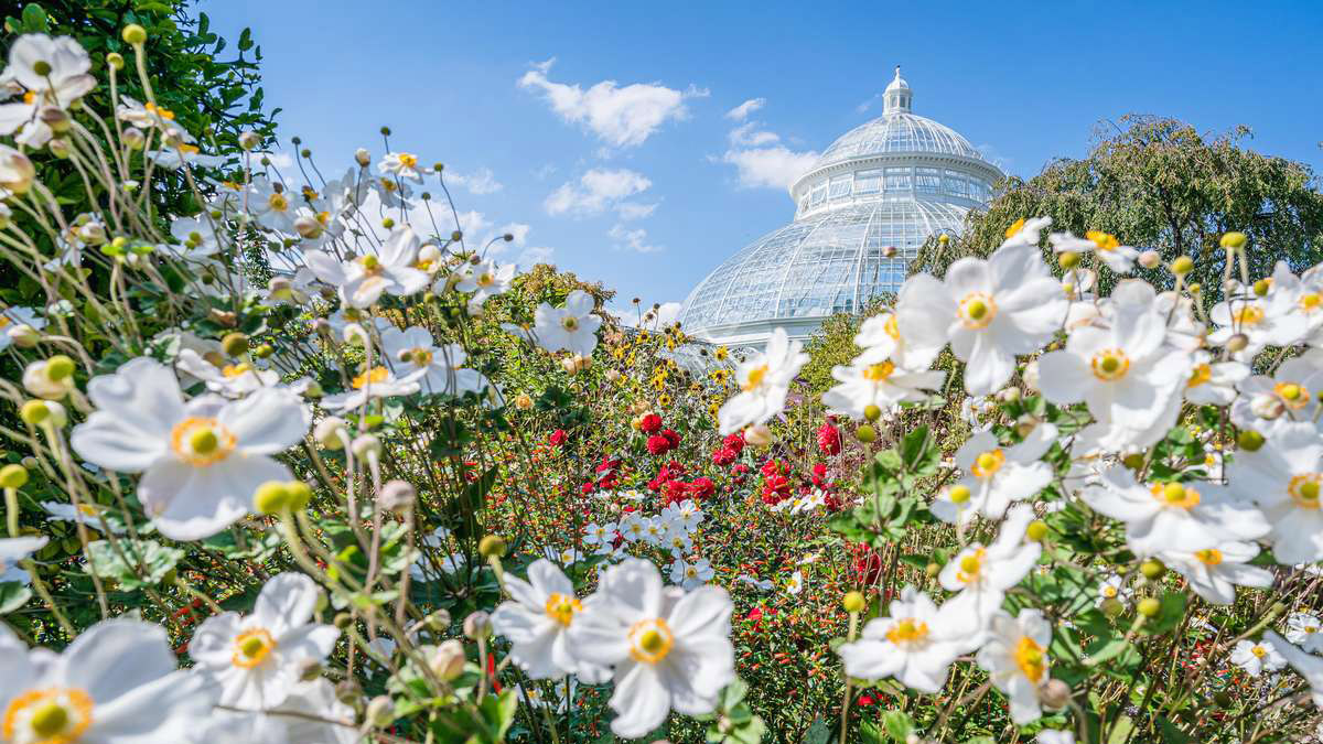 White flowers in the foreground and little red flowers with yellow centers in front of the Conservatory dome