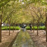 A long, rectangular water feature leads down through two evenly arranged paths of planted trees, with people visible in the distance