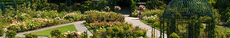 Rose_Garden.jpg