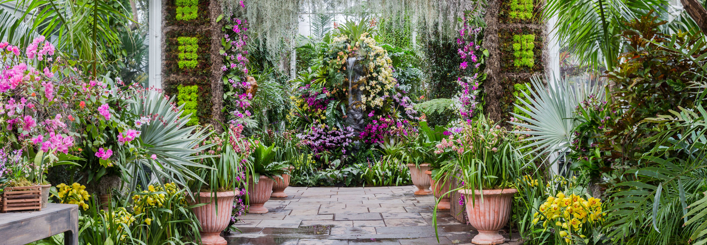 Image Gallery Orchidshow