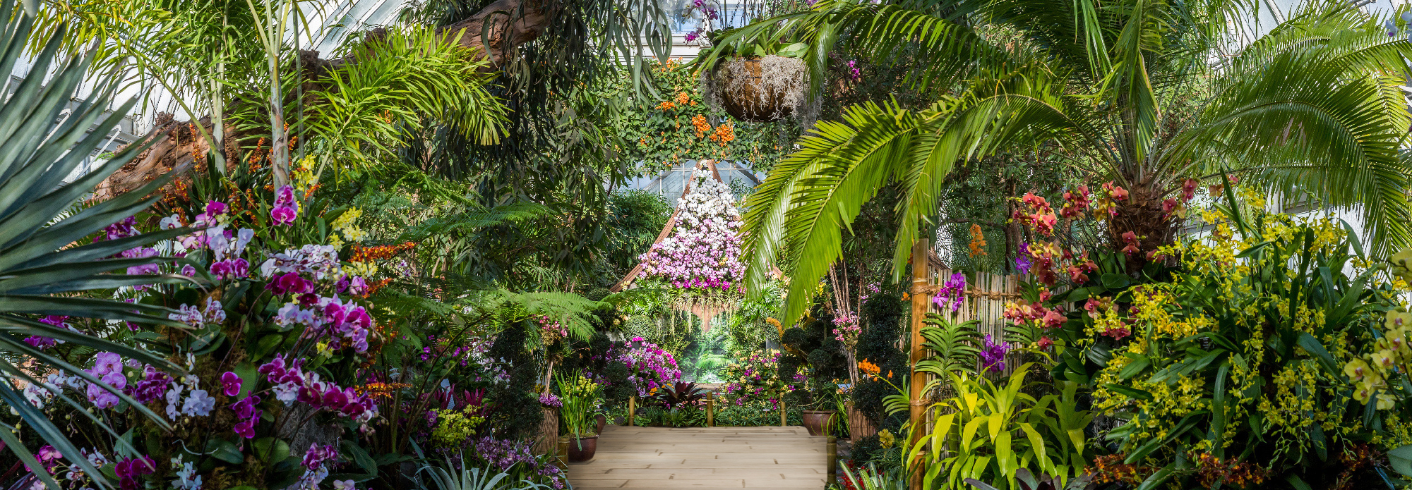 The Orchid Show Thailand Nybg