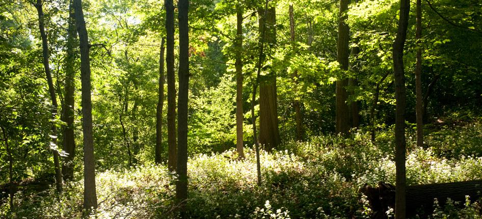 forest york