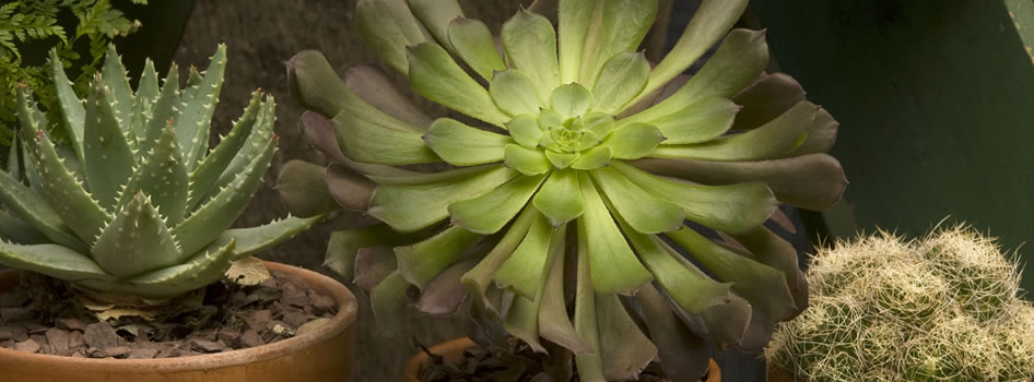 Growing carnivorous plants nybg for Large non toxic house plants