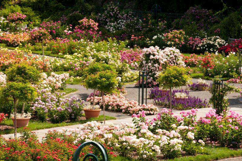 Rose Garden Pictures House Decor Ideas