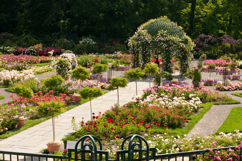 Image gallery rose garden for White house rose garden design