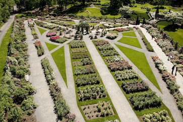 <b>The Geometrical Gardens of the Baroque Age inspired the Layout of the Rose Garden at The New York Botanical Garden </b><br />Rose Garden NYBG  (photo by Ivo M. Vermeulen)