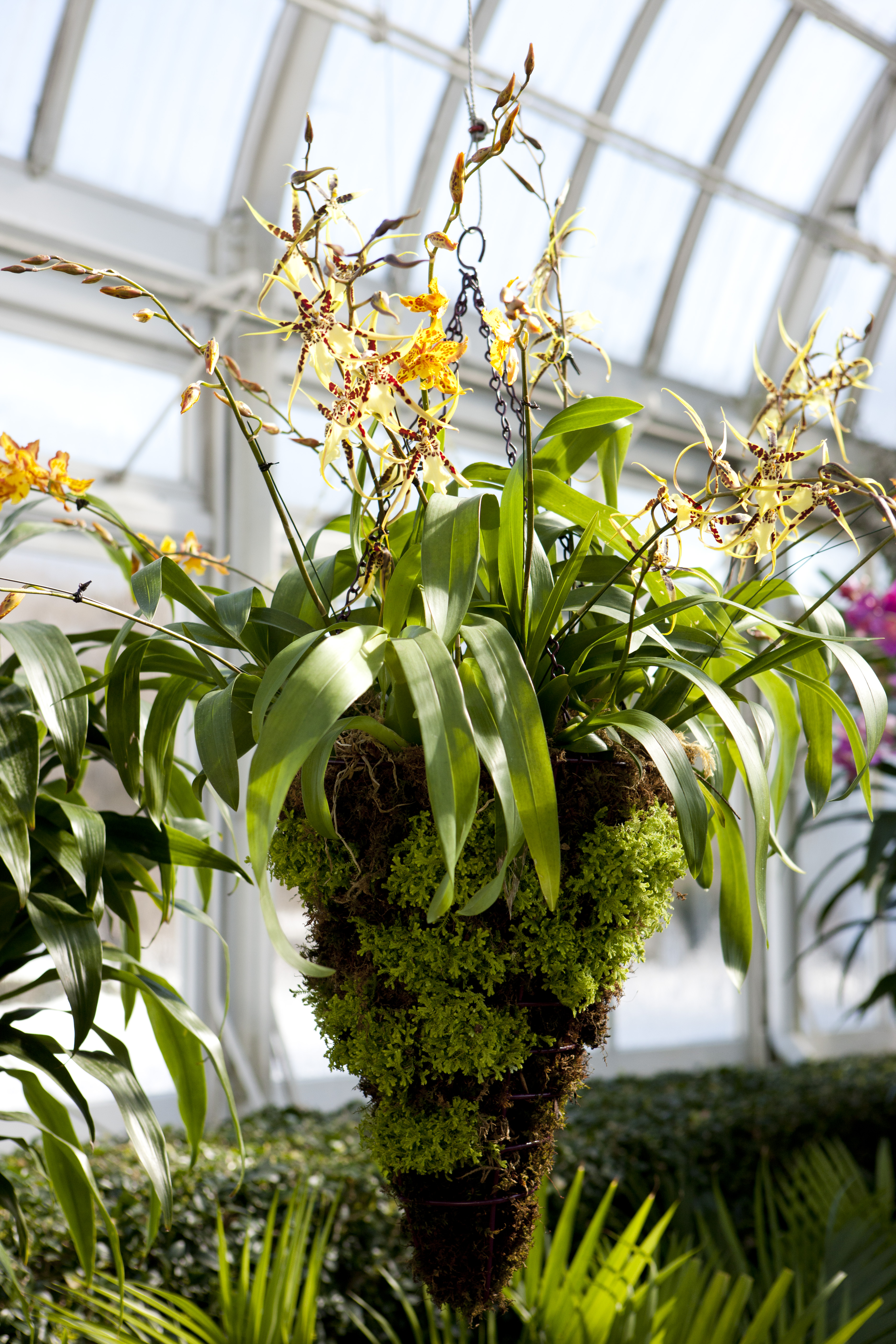 The Orchid Show Chandeliers Laplaca Cohen Strategic And
